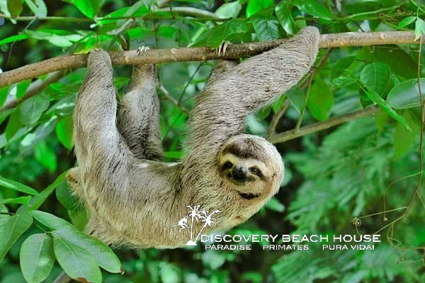 3 toed sloth discovery beach house