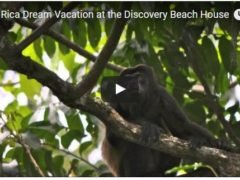 Costa Rica Dream Vacation