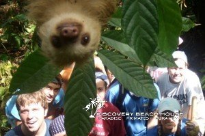 KSTR kids learn all about Two-toed sloths.