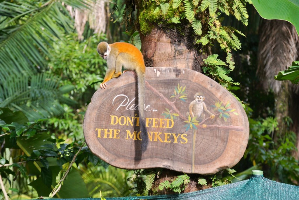 Please don't feed the monkeys