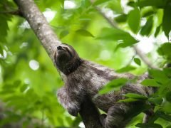 Sloths ENdangered or IN Danger?