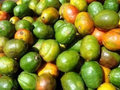The Delicious Fresh Fruit You Can Find in Costa Rica